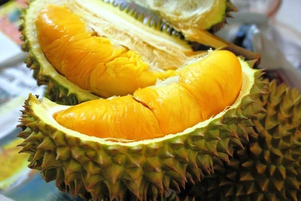 durian656